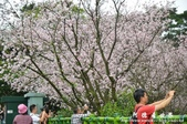 2013天元宮:1831719152.jpg