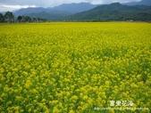 2011富里花海:1837852855.jpg