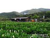 2012竹子湖海芋季:1226754828.jpg