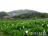 2012竹子湖海芋季:1226754834.jpg