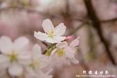 2013天元宮:1831719185.jpg