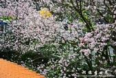 2013天元宮:1831719106.jpg
