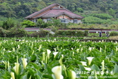 2012竹子湖海芋季:1226754845.jpg