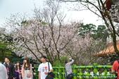 2013天元宮:1831719151.jpg