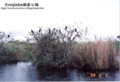 沼澤國家公園:1014382429.jpg