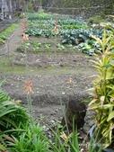 阿德老家及菜園:1895021998.jpg