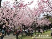 2011陽明山花季:1481334693.jpg