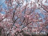 2011陽明山花季:1481334700.jpg