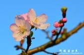 2013天元宮:1831719073.jpg