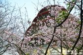 2013天元宮:1831719145.jpg
