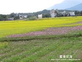 2011富里花海:1837852803.jpg