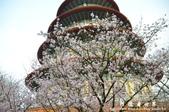 2013天元宮:1831719148.jpg