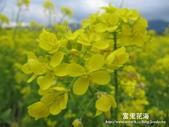 2011富里花海:1837852820.jpg