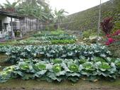 阿德老家及菜園:1895022052.jpg