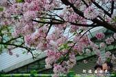2013天元宮:1831719080.jpg