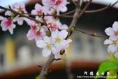 2013天元宮:1831719109.jpg