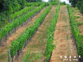 Badacsony葡萄園:1576022082.jpg