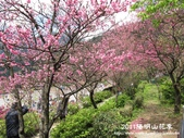 2011陽明山花季:1481334705.jpg