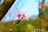 2013天元宮:1831719074.jpg