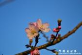 2013天元宮:1831719059.jpg