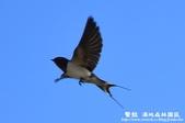 鰲鼓溼地-夕照、黑面琵鷺:1819987109.jpg