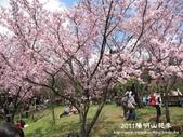 2011陽明山花季:1481334698.jpg