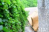 Badacsony葡萄園:1576022070.jpg