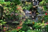 2013前山公園藍鵲:1308876428.jpg