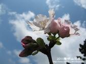 2011陽明山花季:1481334710.jpg