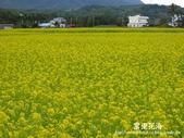 2011富里花海:1837852860.jpg