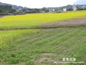 2011富里花海:1837852802.jpg