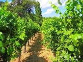 Badacsony葡萄園:1576022097.jpg