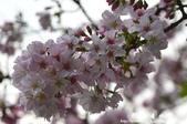 2013天元宮:1831719121.jpg