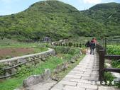 2012竹子湖海芋季:1226754832.jpg
