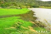 東源濕地-哭泣湖:1356069162.jpg