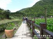 2012竹子湖海芋季:1226754826.jpg