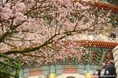 2013天元宮:1831719159.jpg