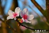 2013天元宮:1831719057.jpg