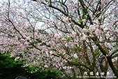 2013天元宮:1831719087.jpg
