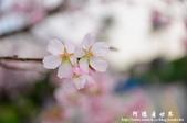 2013天元宮:1831719119.jpg