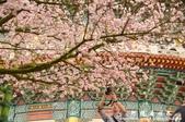 2013天元宮:1831719160.jpg
