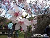 2011陽明山花季:1481334703.jpg
