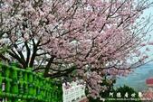 2013天元宮:1831719094.jpg