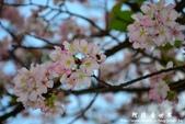 2013天元宮:1831719097.jpg