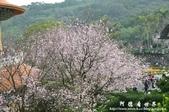 2013天元宮:1831719172.jpg