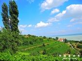 Badacsony葡萄園:1576022086.jpg