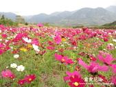 2011富里花海:1837852810.jpg