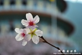 2013天元宮:1831719084.jpg
