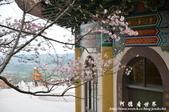 2013天元宮:1831719133.jpg