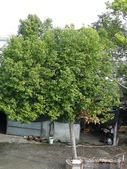 阿德老家及菜園:1895022055.jpg